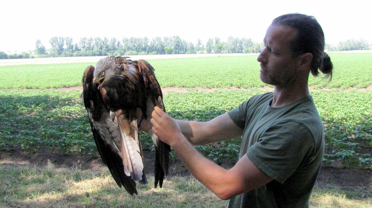 Wissenschaftler hält den Greifvogel auf dem Arm