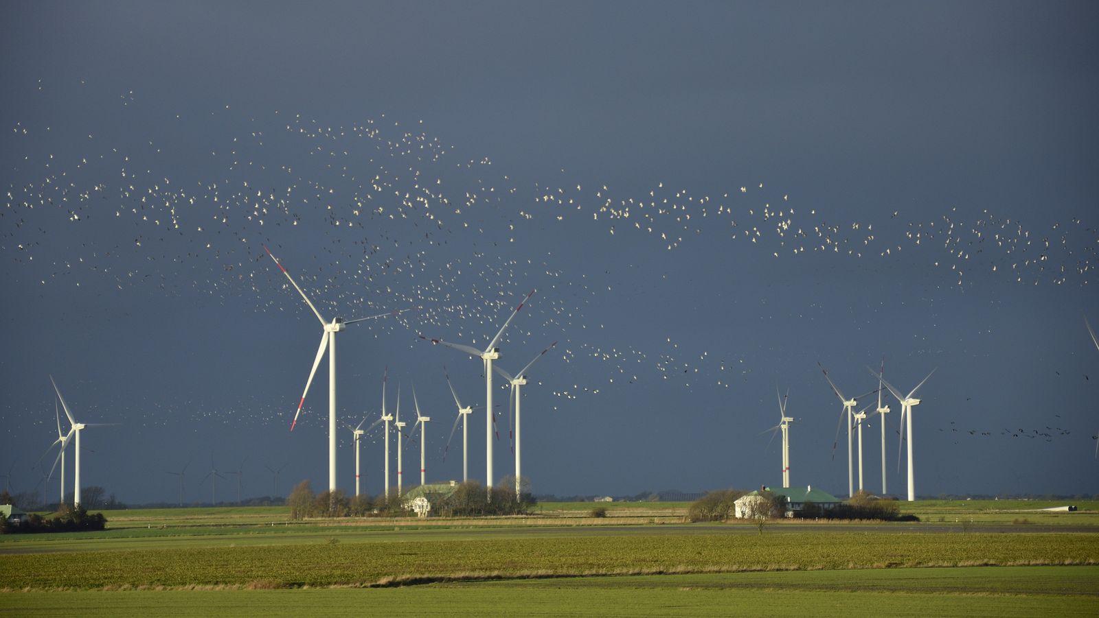 Ein Vogelschwarm fliegt über einen Windpark