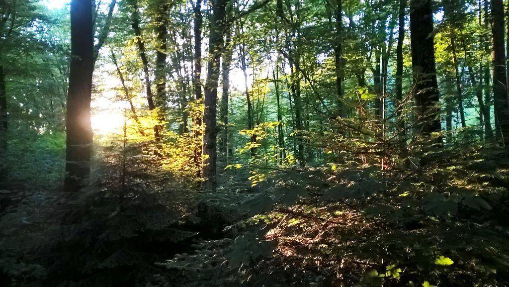 Sonne bricht durch Laubwald