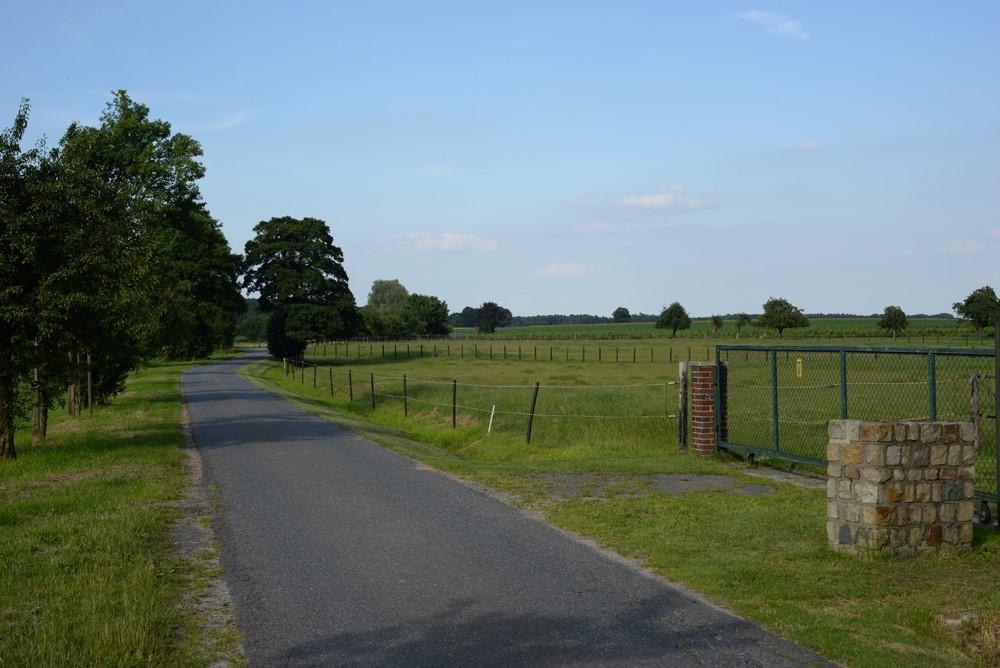 Eine kleine Landstraße führt an einer Weide vorbei